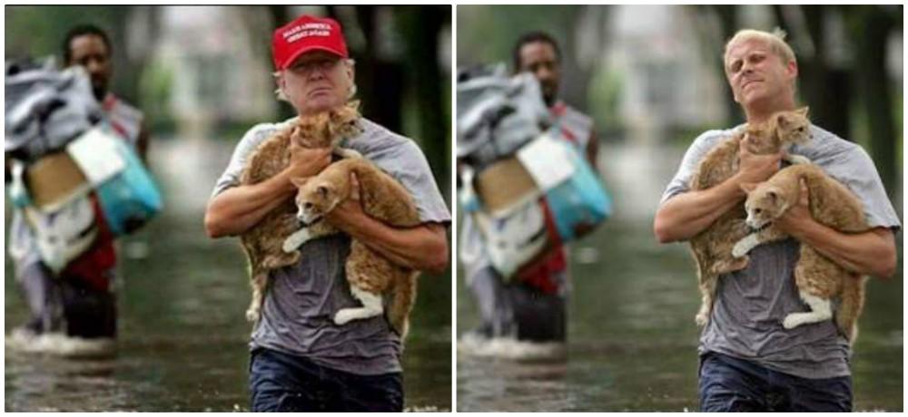 man-saves-cats